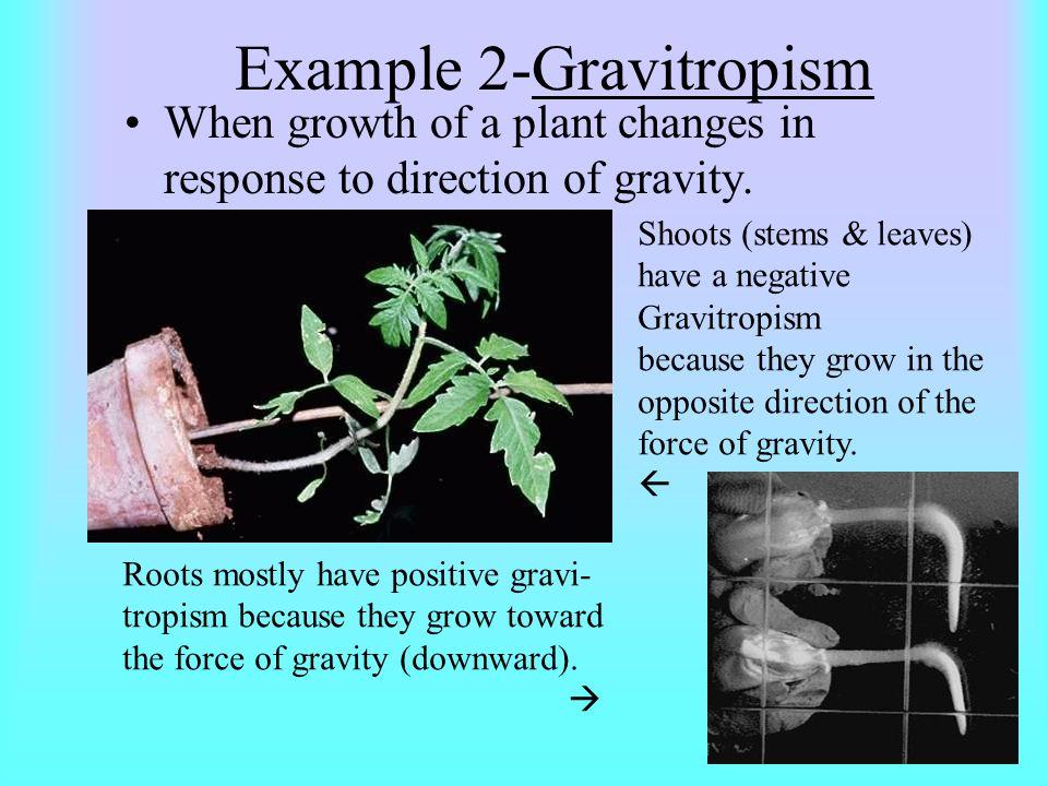 Example 2-Gravitropism