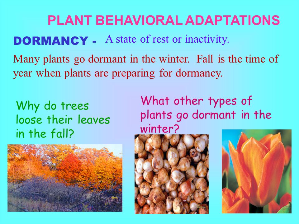 PLANT BEHAVIORAL ADAPTATIONS