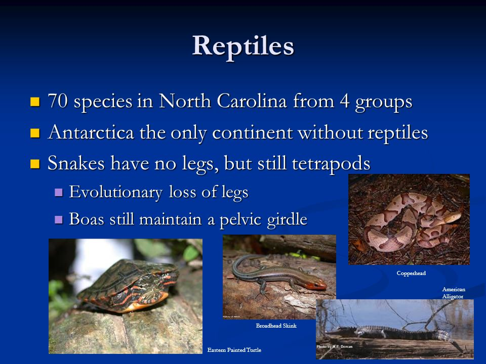 Reptiles 70 species in North Carolina from 4 groups
