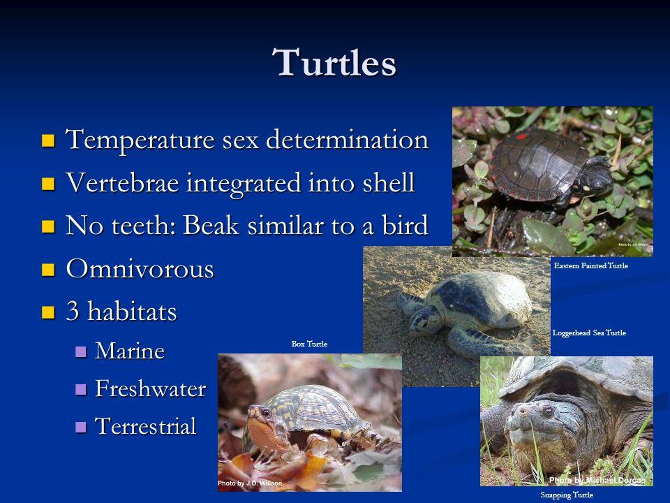 Turtles Temperature sex determination Vertebrae integrated into shell