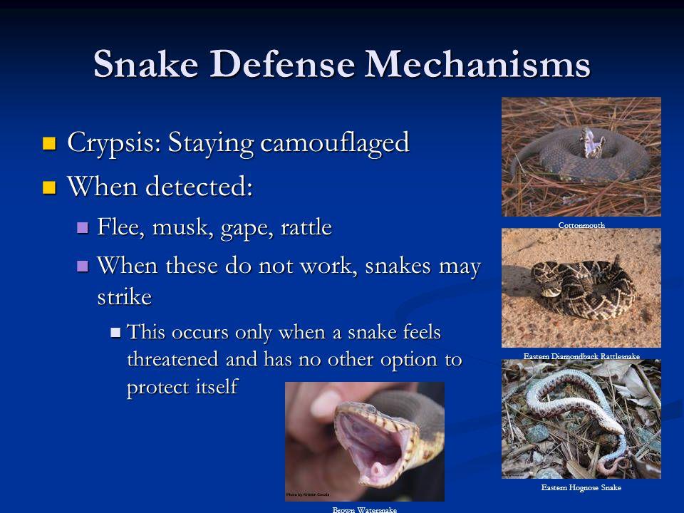 Snake Defense Mechanisms
