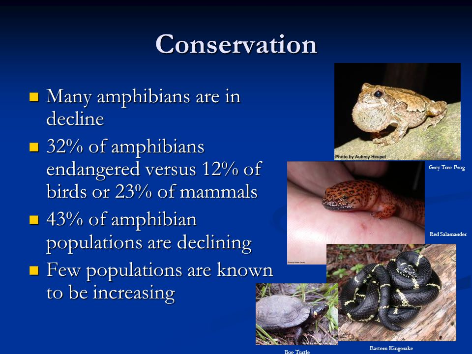 Conservation Many amphibians are in decline