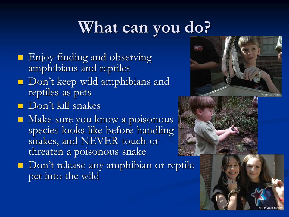 What can you do Enjoy finding and observing amphibians and reptiles