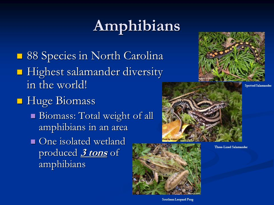 Amphibians 88 Species in North Carolina