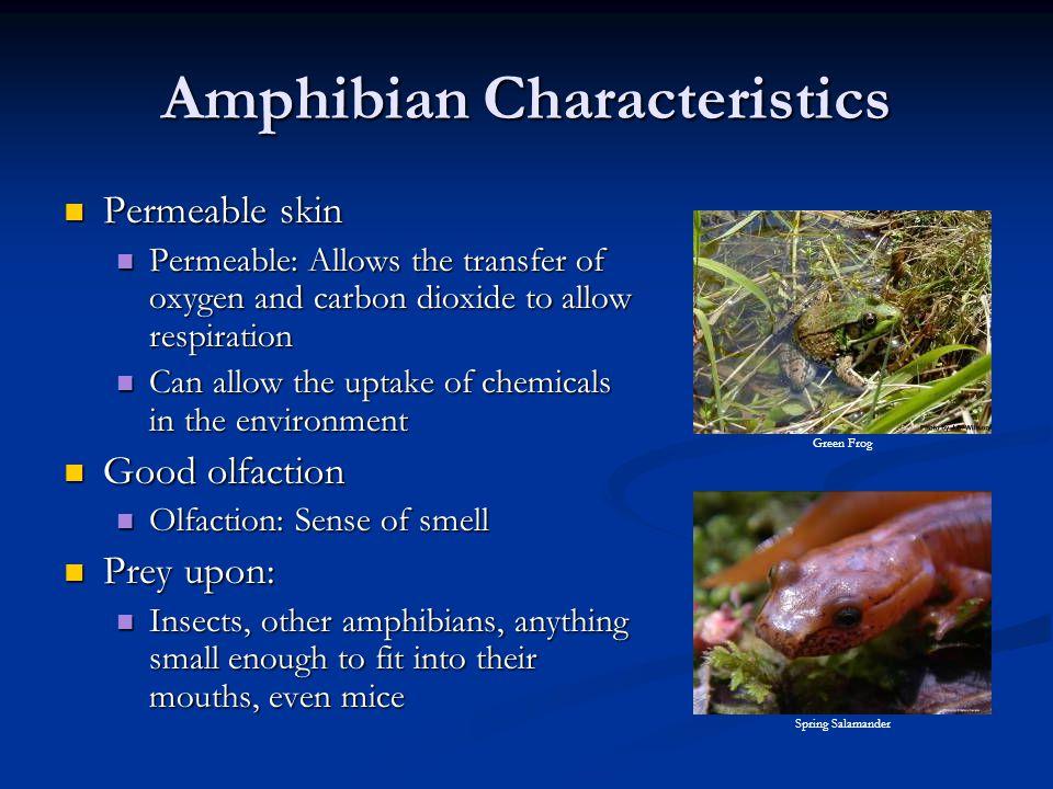 Amphibian Characteristics