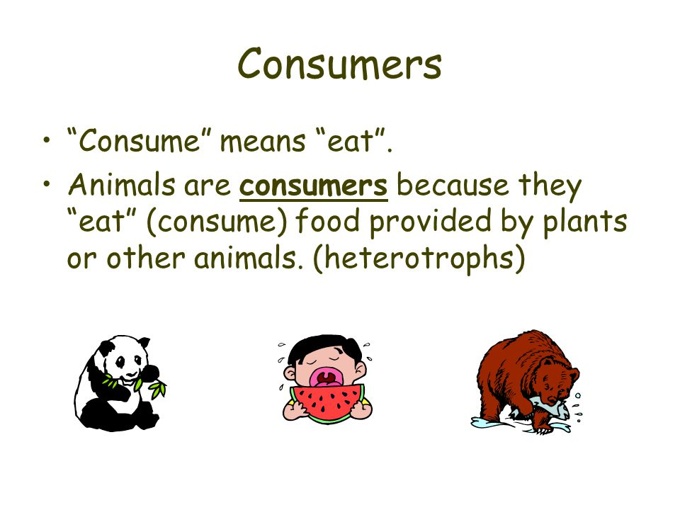Consumers Consume means eat .
