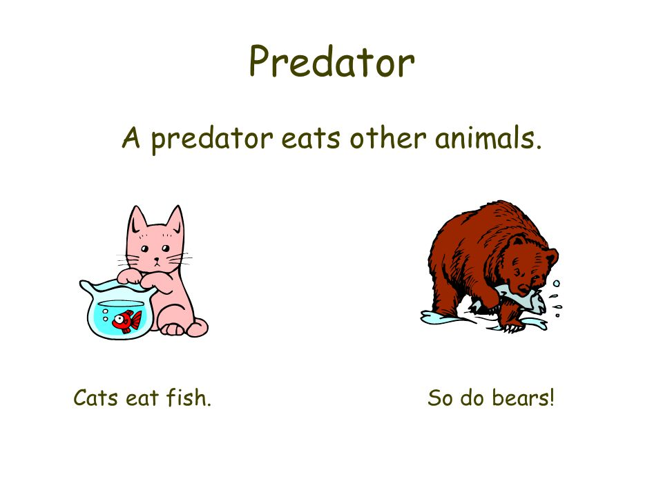 A predator eats other animals.