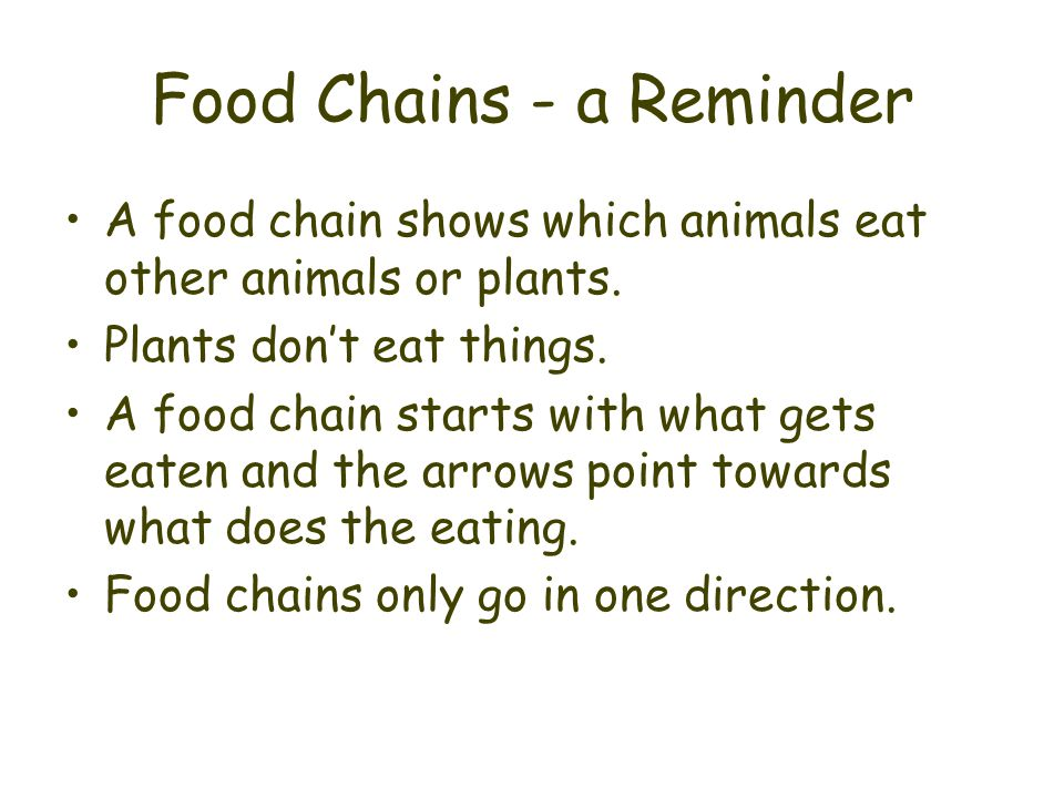 Food Chains - a Reminder