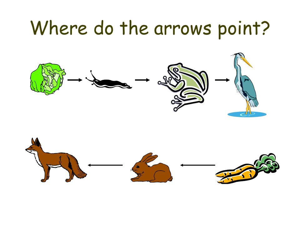 Where do the arrows point