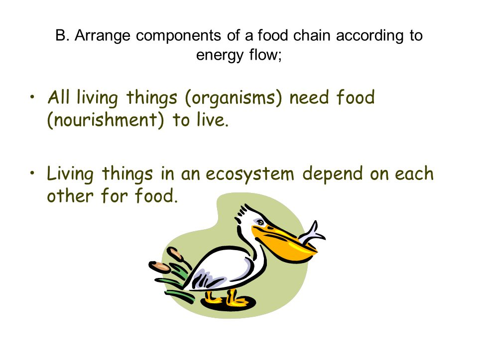 B. Arrange components of a food chain according to energy flow;