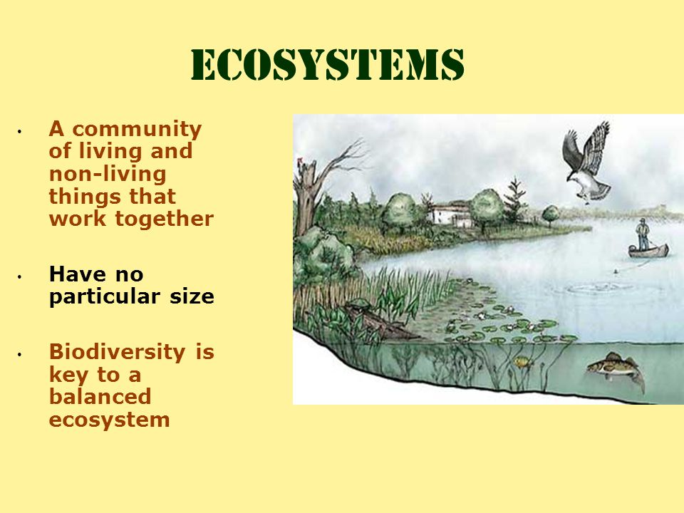 ecosystems A community of living and non-living things that work together. Have no particular size.
