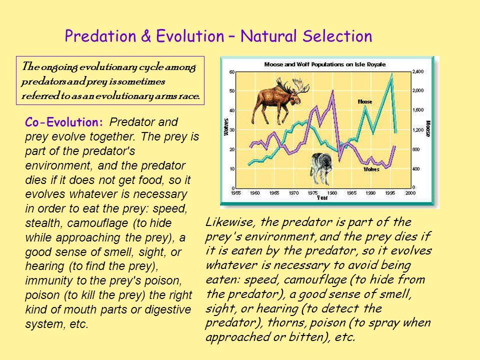 Predation & Evolution – Natural Selection