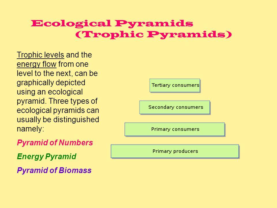 Ecological Pyramids (Trophic Pyramids)
