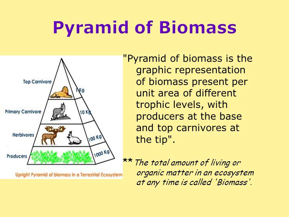 Pyramid of Biomass