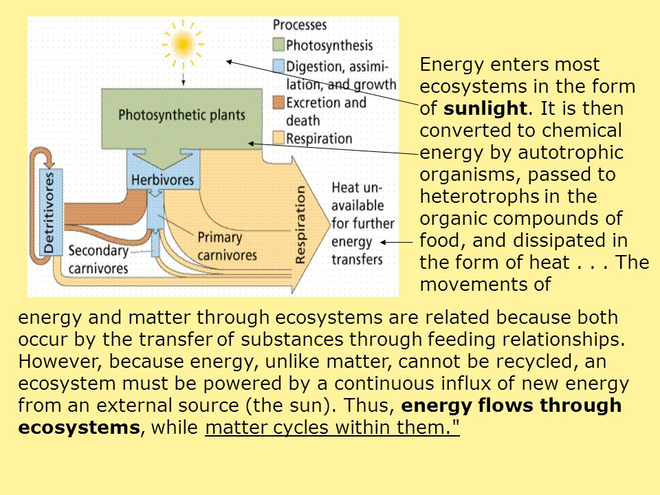 Energy enters most ecosystems in the form of sunlight