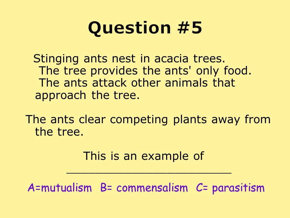 Question #5 Stinging ants nest in acacia trees. The tree provides the ants only food. The ants attack other animals that approach the tree.