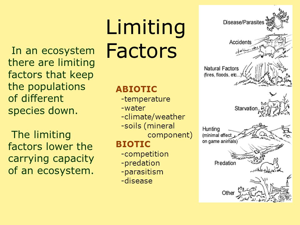 Limiting Factors In an ecosystem there are limiting factors that keep the populations of different species down.