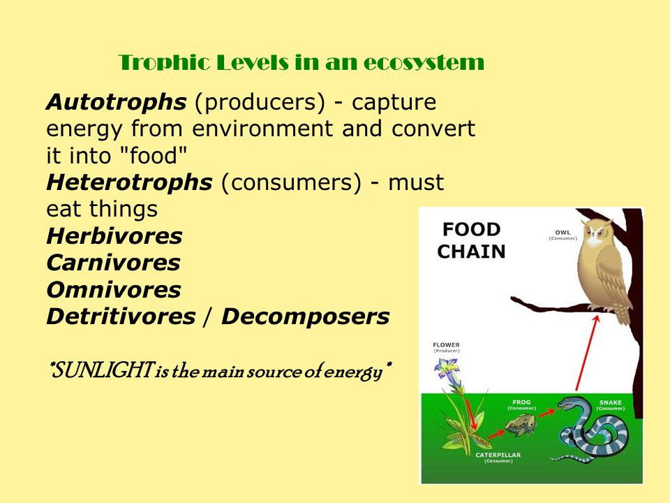 Trophic Levels in an ecosystem
