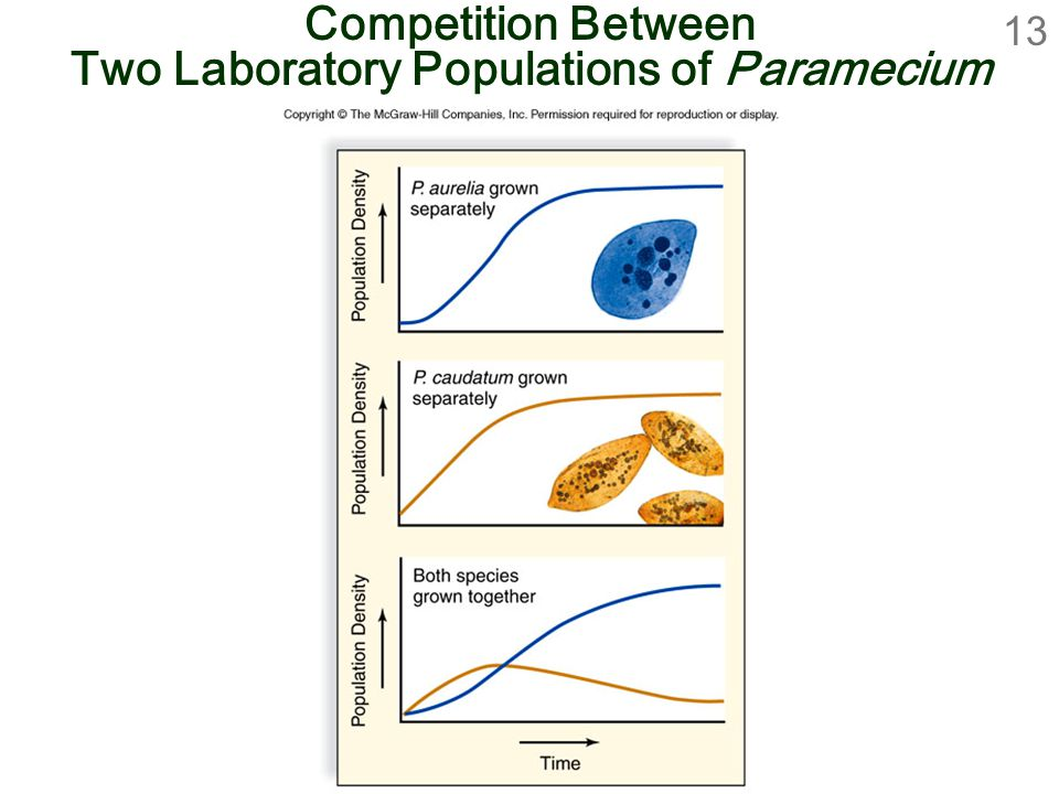Competition Between Two Laboratory Populations of Paramecium