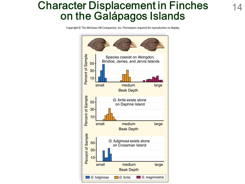 Character Displacement in Finches on the Galápagos Islands