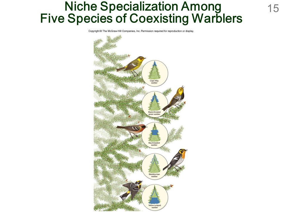 Niche Specialization Among Five Species of Coexisting Warblers