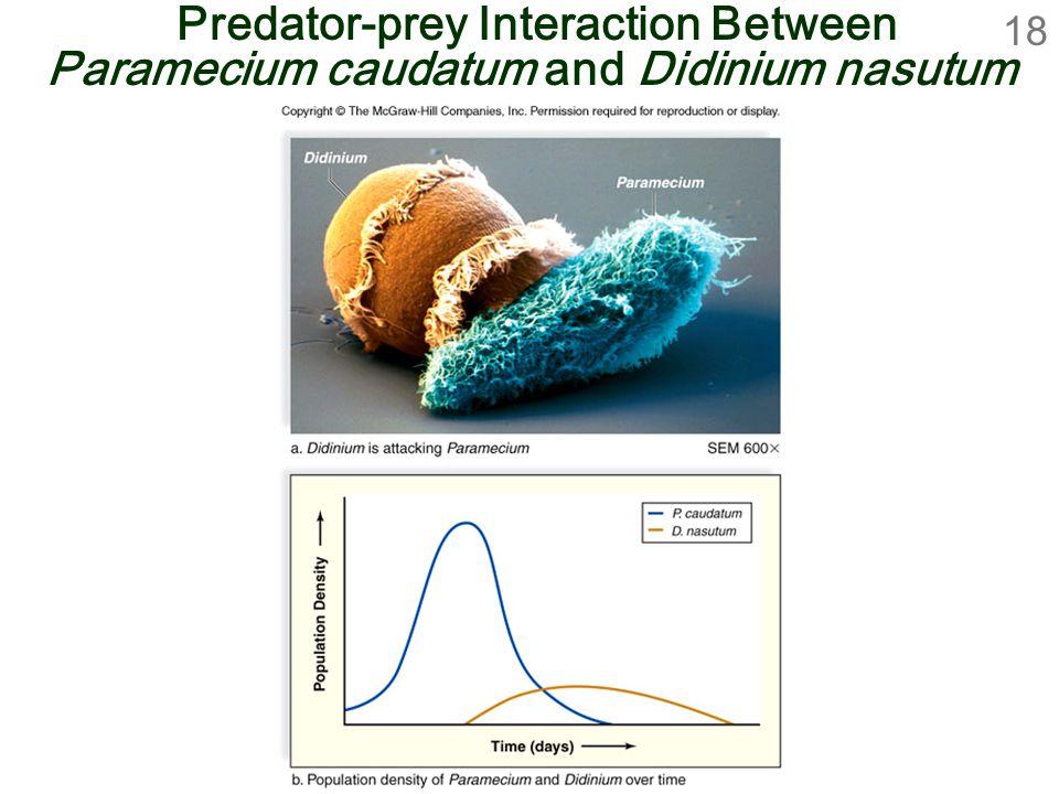 Predator-prey Interaction Between Paramecium caudatum and Didinium nasutum