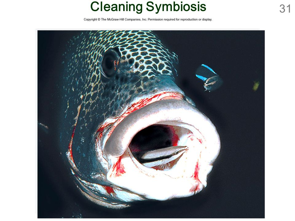 Cleaning Symbiosis