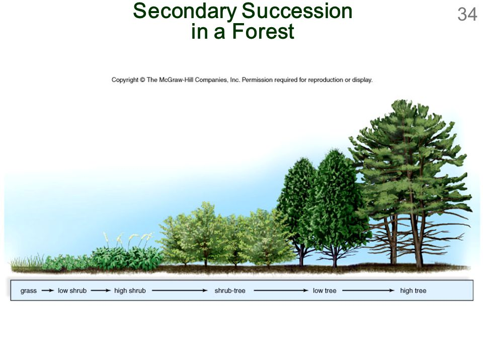 Secondary Succession in a Forest