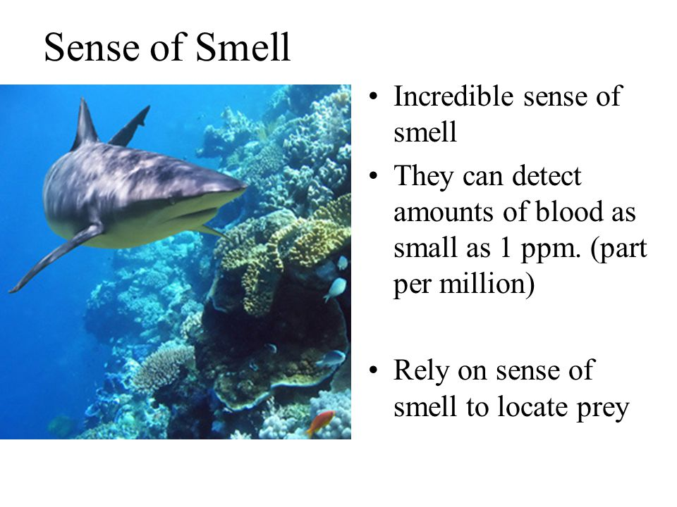 Sense of Smell Incredible sense of smell
