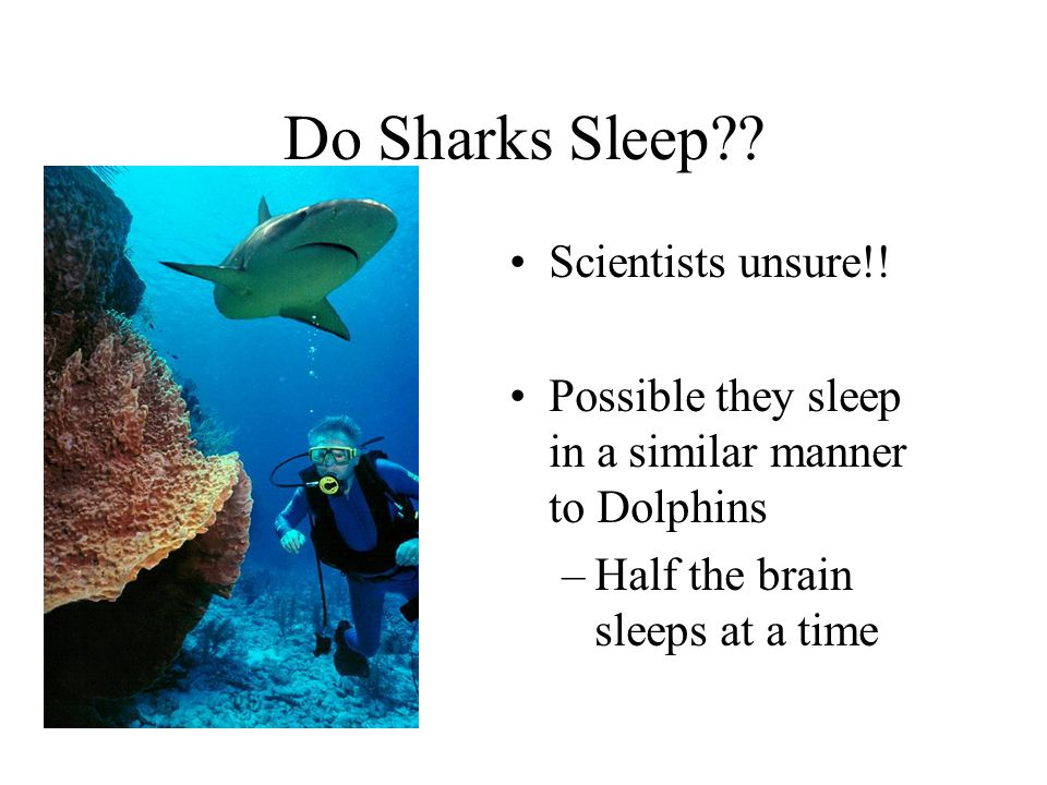 Do Sharks Sleep Scientists unsure!!