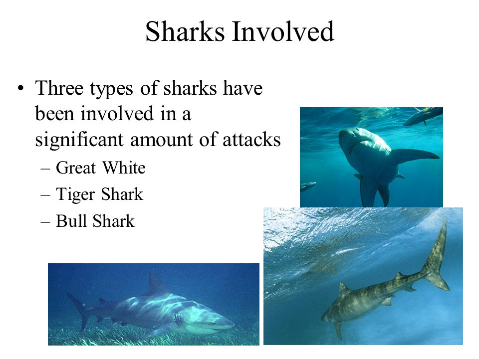 Sharks Involved Three types of sharks have been involved in a significant amount of attacks. Great White.