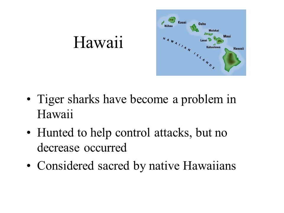 Hawaii Tiger sharks have become a problem in Hawaii