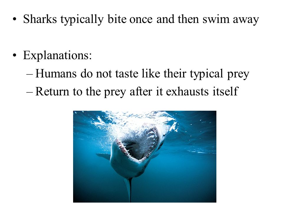 Sharks typically bite once and then swim away