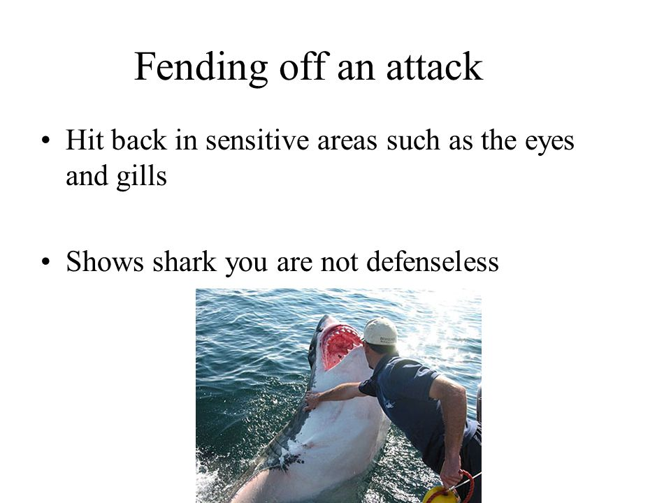 Fending off an attack Hit back in sensitive areas such as the eyes and gills.
