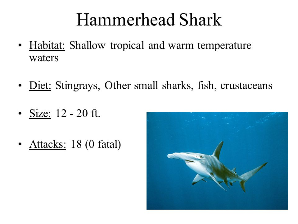 Hammerhead Shark Habitat: Shallow tropical and warm temperature waters