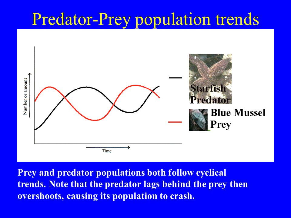 Predator-Prey population trends