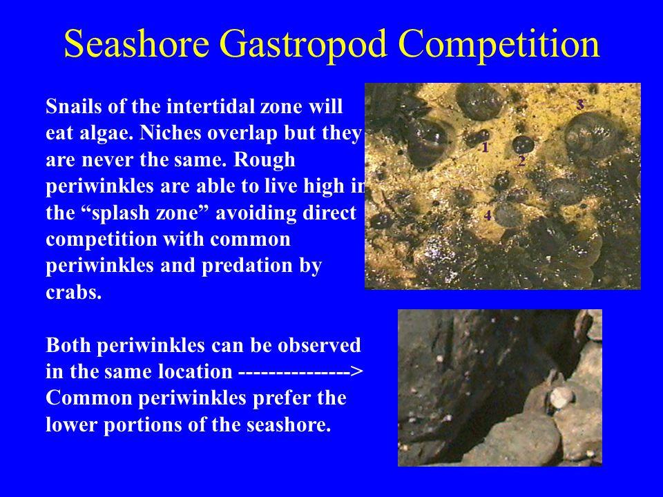 Seashore Gastropod Competition