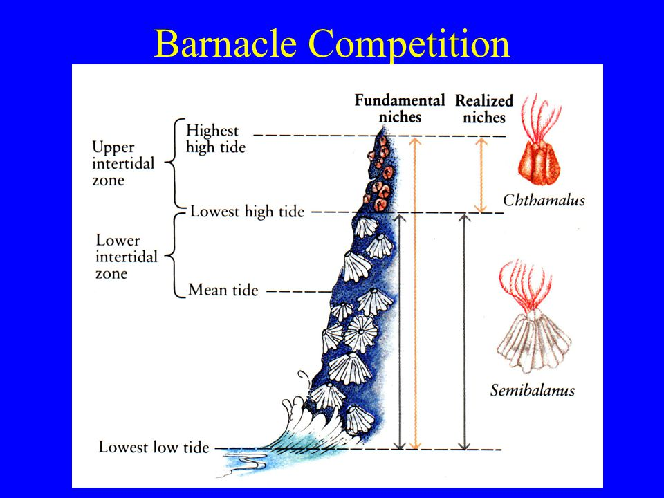 Barnacle Competition