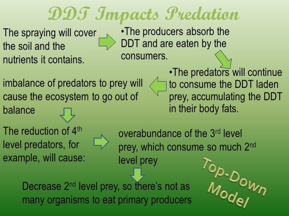 DDT Impacts Predation Top-Down Model