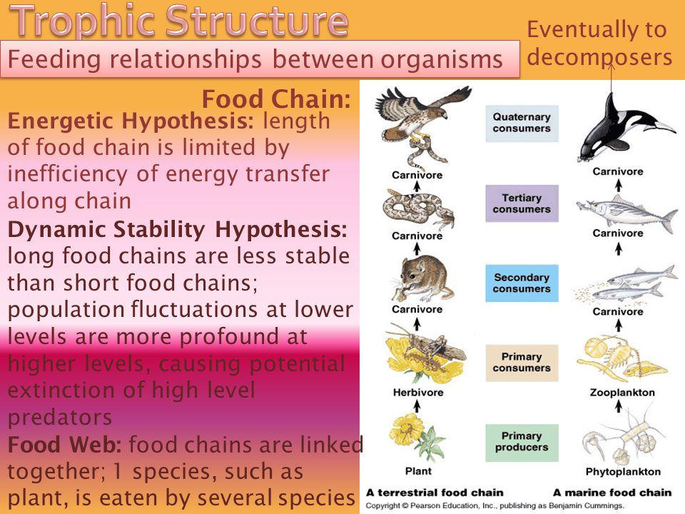 Trophic Structure Feeding relationships between organisms Food Chain: