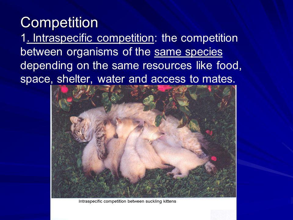 Competition 1.