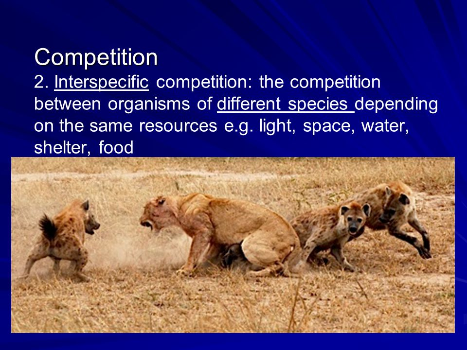 Competition 2.