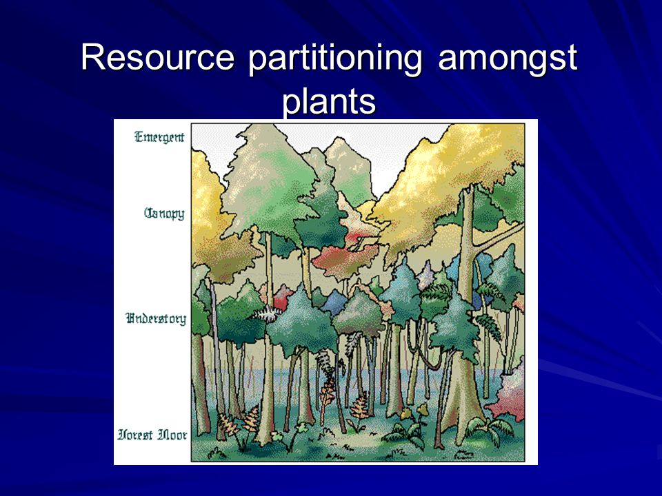 Resource partitioning amongst plants