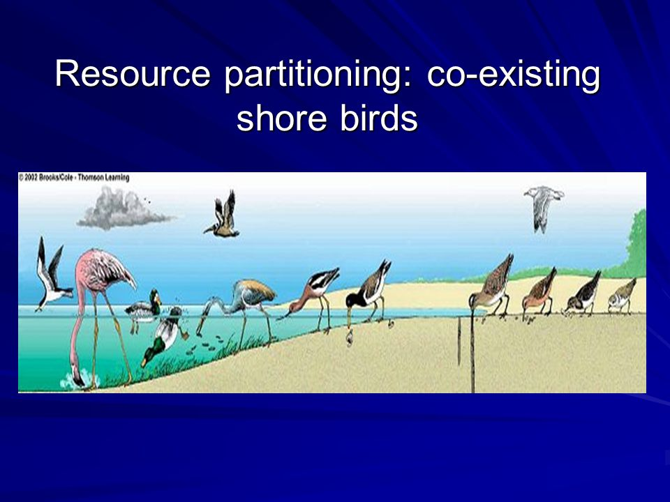Resource partitioning: co-existing shore birds