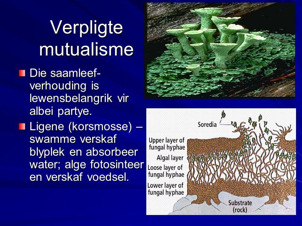 Verpligte mutualisme Die saamleef-verhouding is lewensbelangrik vir albei partye.