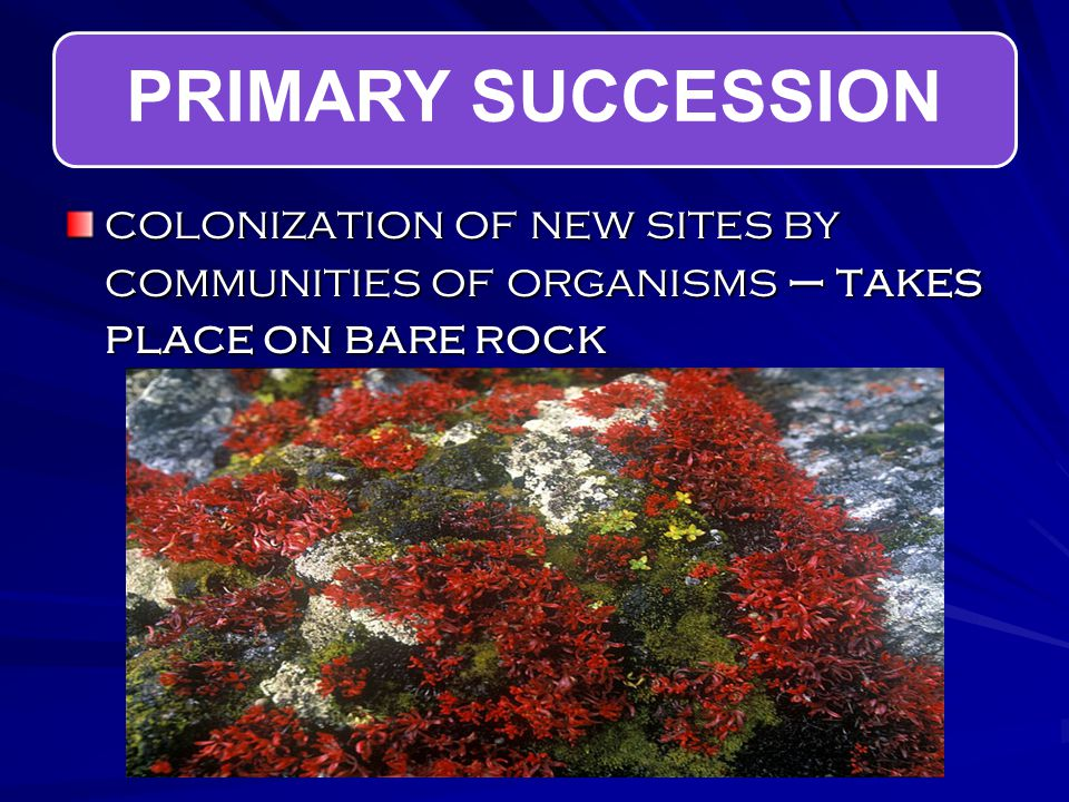PRIMARY SUCCESSION colonization of new sites by communities of organisms – takes place on bare rock