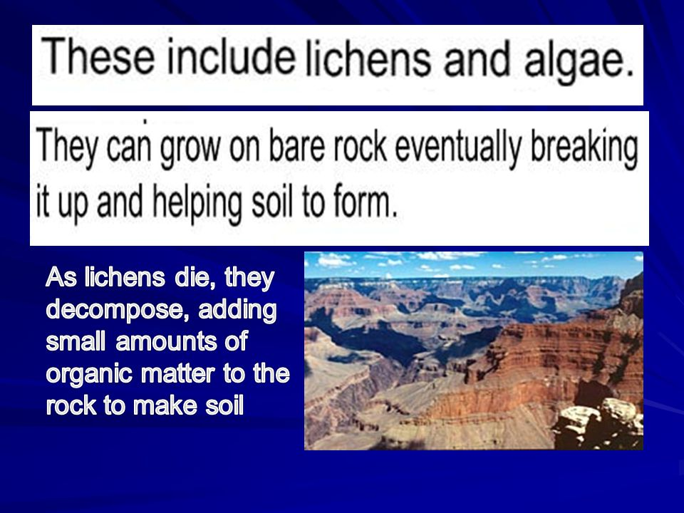 As lichens die, they decompose, adding small amounts of organic matter to the rock to make soil