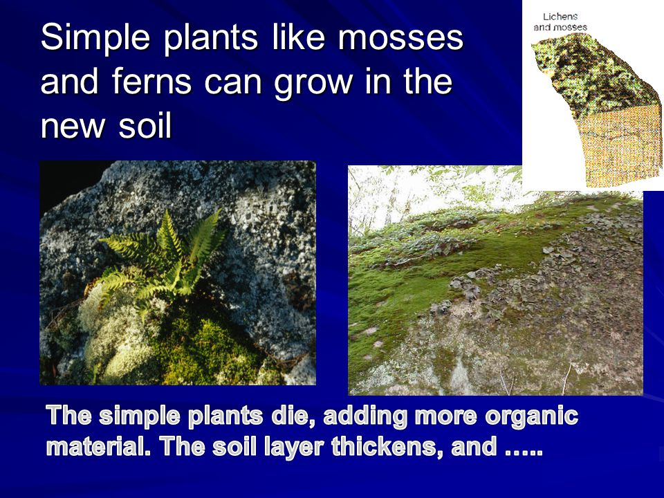 Simple plants like mosses and ferns can grow in the new soil