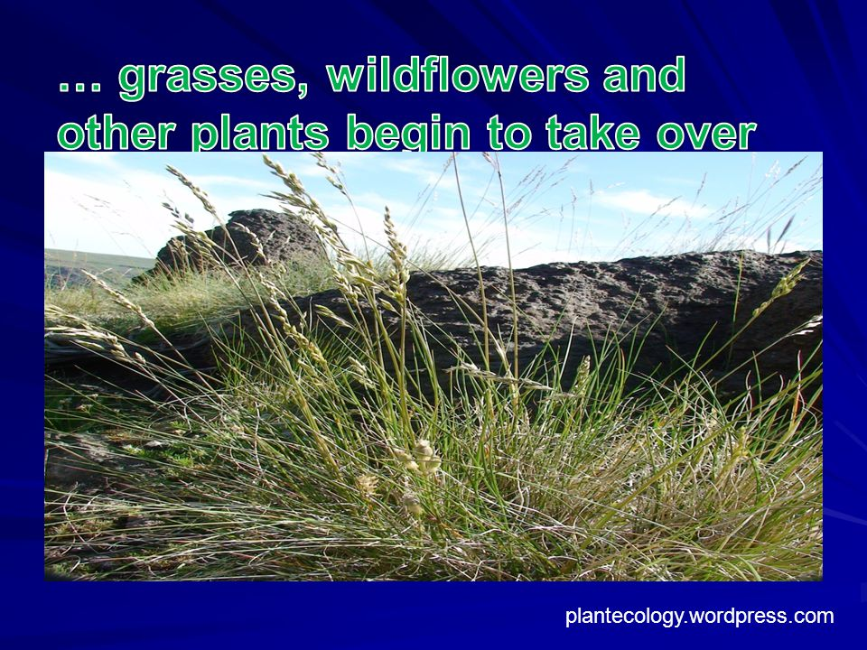 … grasses, wildflowers and other plants begin to take over