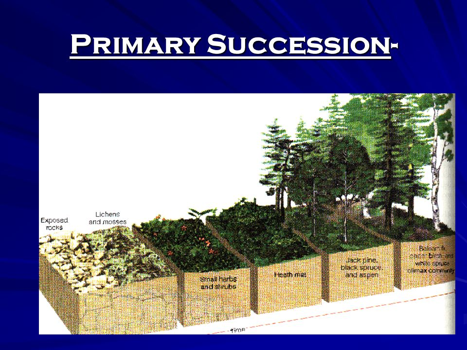 Primary Succession- Rock